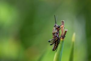 Macro: Grasshopper